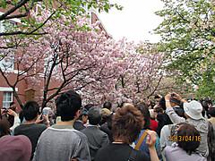 Sakura_zohekyoku1