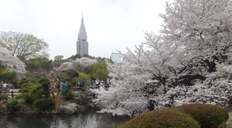 140402hanami_gyoen