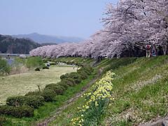 160425kakunodate_kawa1