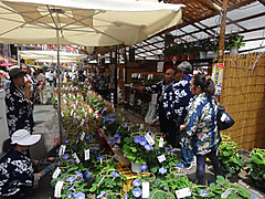 170702togenuki_asagao